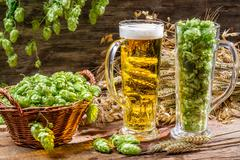 ears of wheat in gold surrounded by fresh beer hops - stock photo