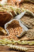 rye, barley and wheat are the basis for good bread - stock photo