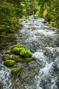 rushing mountain stream in the forest - stock photo