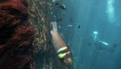 Schools of fish swimming underwater Stock Footage