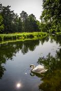 Swan floating on the river in the wild areas Stock Photos