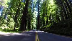 Highway Drive Through a Redwood Forest Arkistovideo