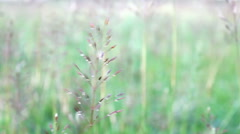 Grass on Field in CloseUp View Stock Footage