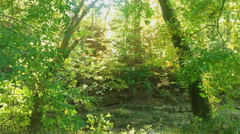 Sunlight Descends into an Autumn Forest Stock Footage