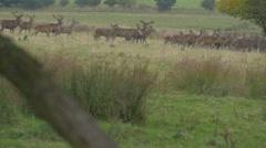 Herd of deer, slow motion Stock Footage