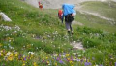 Backpackers going through meadow full of flowers into mountains Stock Footage