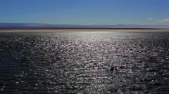 Chaxa Lagoon in the Desert  of Atacama Chile. Stock Footage