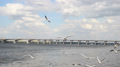 Seagulls flying over the river Stock Footage