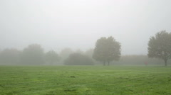 Morning run in the park Arkistovideo