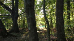 Forest in the afternoon, early fall, slider shot Stock Footage