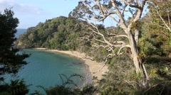 Scenic view of Whale Bay on the Tutukaka coastline Stock Footage