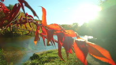 Fall leaves rustle on a bright sunny fall day, Maine, close up Stock Footage