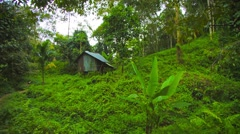 hut in the rainforest on the hill. thailand, phuket - stock footage