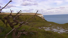 Beautiful nature at the white cliffs of Dover on the British coast Stock Footage