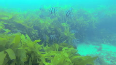 Schooling fish underwater. - stock footage