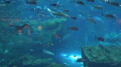 Beautiful Aquarium Dubai mall shopping exotic fish wildlife blue light ocean day Stock Footage