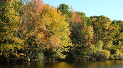 Autumn fall foliage near water, Maine, medium shot Stock Footage