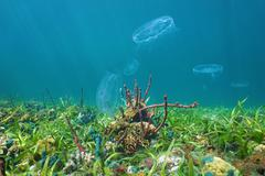 colorful marine life on seabed with moon jellyfish - stock photo