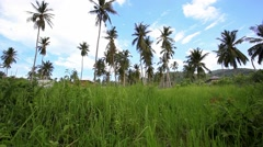 Coconut trees in jungle forest on the sky bacground. 1920x1080. HD - stock footage
