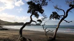 Pohutukawa tree at idyllic sandy beach Stock Footage