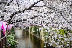 Tokyo, japan spring canal Stock Photos