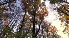 Autumn. Yellow tree crown in the rays of the setting sun. - stock footage