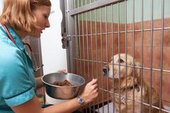 Veterinary nurse feeding dog in cage Stock Photos