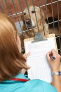 Veterinary nurse checking on dog in cage Stock Photos