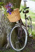 Old fashioned bicycle leaning against tree Stock Photos