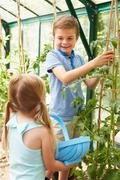 Children harvesting home grown tomatoes in greenhouse Stock Photos