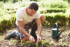 Man planting seedling in ground on allotment Stock Photos