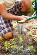 Close up of man watering seedlings in ground on allotment Stock Photos