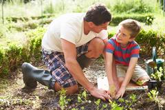 Father and son planting seedling in ground on allotment Stock Photos
