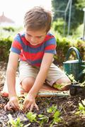 Boy planting seedlings in ground on allotment Stock Photos