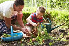 Father and son harvesting carrots on allotment Stock Photos