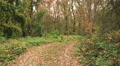 road in the autumn wood. Steadicam shot HD Footage