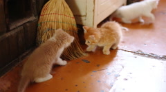 Cute  kittens playing indoor Stock Footage