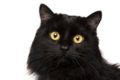 Black cat isolated on white Stock Photos
