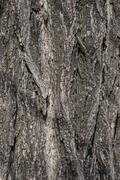 Close up texture of fracture on the tree bark. Stock Photos