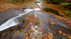 Luxuriant mountain stream with leaves. Stock Footage