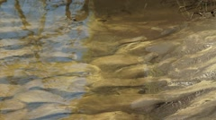 Ripple marks in sandy riverbed, River Dinkel Stock Footage