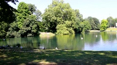 Small lake inside city with swans  and geese in Germany  near uninvited guests Stock Footage
