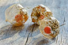 Stock Photo of physalis alkekengi on wood
