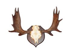 Antler Stock Photos