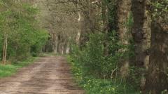 Tilt up out oak lane in rural landscape Stock Footage