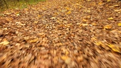 Quick movement on autumn footpath. Red and yellow leaves on the green way. Stock Footage