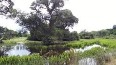 Pantanal landscape in Brazil Stock Footage
