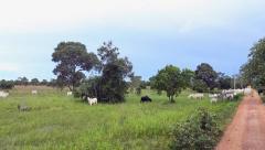 The farm in Pantanal, Brazil - stock footage