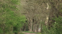 Oak lane in rural landscape.  Scenic landscape of the Drentse Aa river valley Stock Footage
