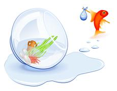 goldfish homeless - stock illustration